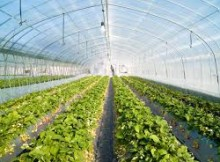 when plant vegetables greenhouse