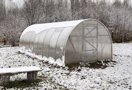 vegetables greenhouse winter