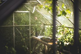 greenhouse sunlight