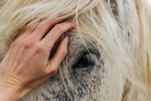 petting horse
